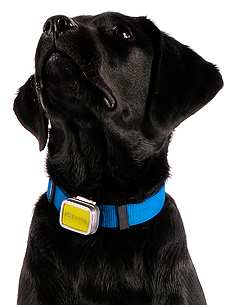 When You're Away, Your Pet Will Play! Monitor Activity with the SNIF Tag