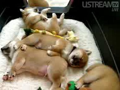 WARNING: Puppy Cam Is Addictive and Contagious