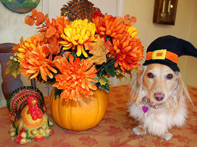 Tell Us: Does Your Pet Get To Participate In Thanksgiving?