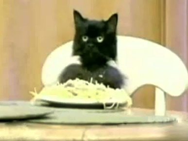 Don't Miss: The Spaghetti Cat's New Theme Song!