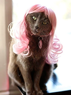 Wig Your Cat Out