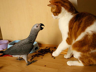 Caption Contest: What Is the Bird Saying to the Cat?
