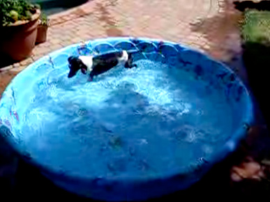 Workout Video! This Dachshund Does Water Aerobics