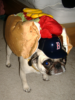 Hot Dog Dog Puppies. hotdog dog costume buy