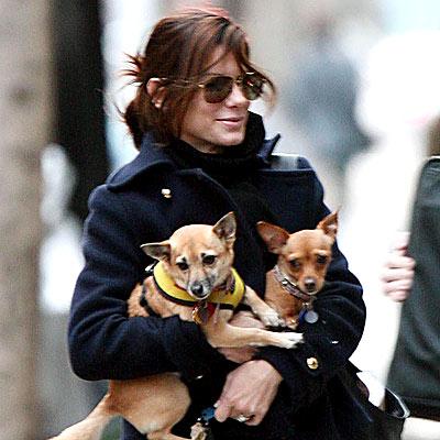 DOG WALKER photo | Sandra Bullock