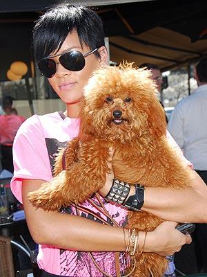 PUPPY CHOW photo | Rihanna