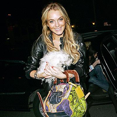 ANIMAL ATTRACTION photo   Lindsay Lohan