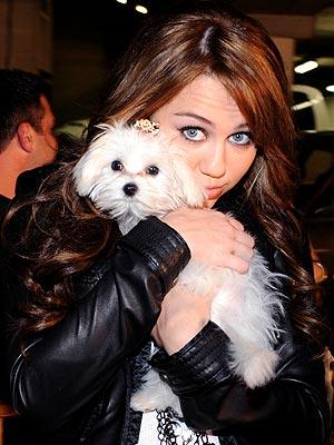 CUDDLE BUDDY photo | Miley Cyrus