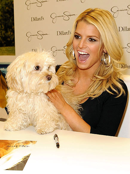 jessicas simpsons puppy. photo | Jessica Simpson