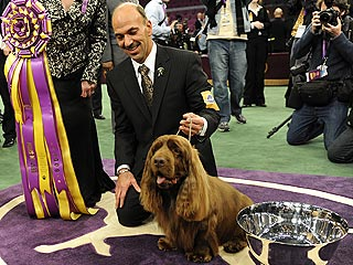 Westminster Winner Barks Back from Near-Death