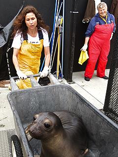 Minnie Driver's Passion: Marine Wildlife   Minnie Driver