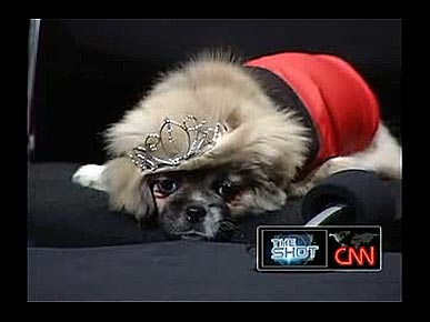 "CNN's Anderson Cooper Hosts ""Pick of the Litter 'Pupidential' Debate"""