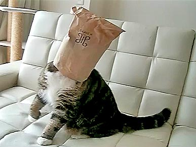 Funny Pet Video: Kitty + Paper Bag = Hilarious!