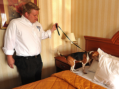 It's Beagles vs. Bed Bugs in California