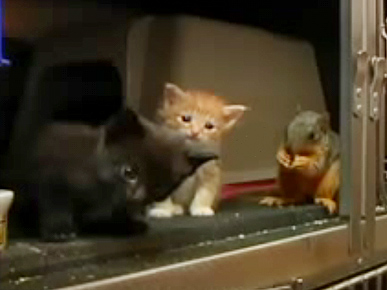 Nursing Cat Adopts Baby Squirrel into Litter