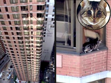 Me-OW! Cat Survives 26-Story Plunge