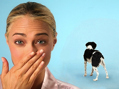 Petiquette: What to Do When Fido Farts in Front of Others?