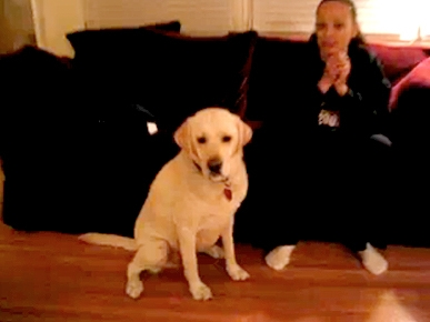 Thursday's Funny Video: Yellow Lab Takes Your Beverage Orders!
