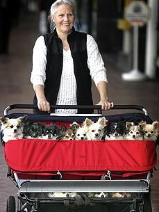 Bark Off: What's Your Go-To Pet Stroller?