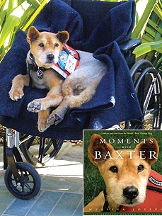 Baxter the Dog Brings Calm, and Joy, to Final Moments of Very Ill