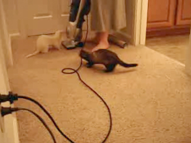 Thursday's Funny Video: Attack of the Vacuum!