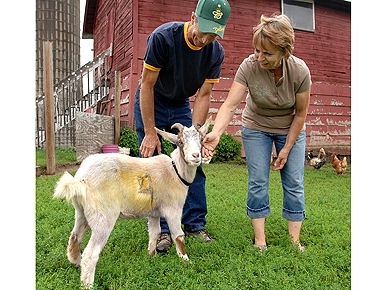 Painted Goat Rescued from Car Trunk Finds Forever Home