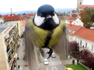 Hungarian Surveillance Camera Goes to the Birds