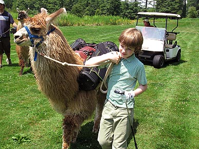 North Carolina Golfers Let Llamas Carry Their Clubs