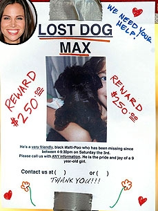Brooke Burns 'Devastated' About Missing Maltipoo Max