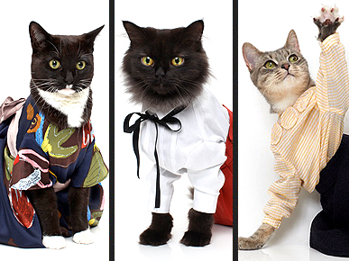 Fashionable Felines Strut Their Stuff For United Bamboo's 2010 Calendar