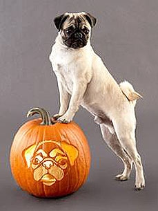 For Your Perfect Pumpkin: Pup-Shaped Stencils!