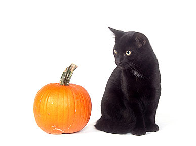 Black Cats Face Their Own Bad Luck on Halloween