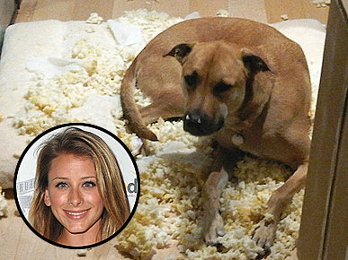 Stars A-Twitter: Lo Bosworth's Pooch Looks Cute Getting Into Trouble