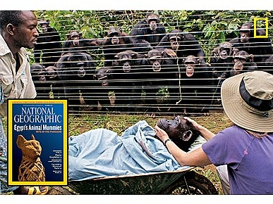 The Water Bowl: The Story Behind the Chimp Burial Photo; Plus, Are Dogs Really That Smart?