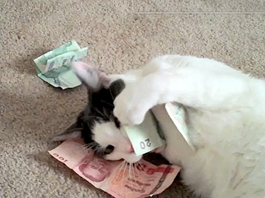 Monday's Funny Video: Mean Kitty Has Money!