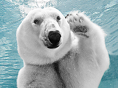 The Water Bowl: Polar Bear Waves at Camera! Plus, Elin Nordegren Lets the Dogs Out