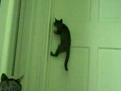 Thursday's Funny Video: Cat Can Open Doors!