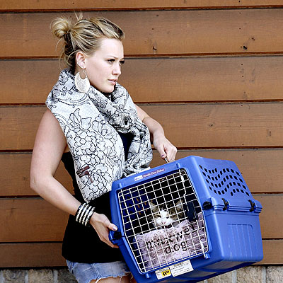PICKING UP PETS photo | Hilary Duff