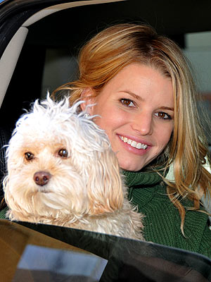 DOG DAYS photo | Jessica Simpson