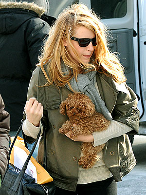Blake Lively Maltipoo on January 20  2009   Dog Day   Star Tracks  Blake Lively   People Com