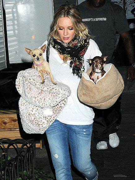 PUPS ON BOARD photo | Hilary Duff