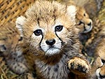 Cutest Baby Animals of 2010!