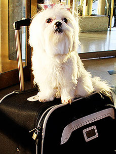 Checking In! Celebs' Favorite Pet-Friendly Hotels