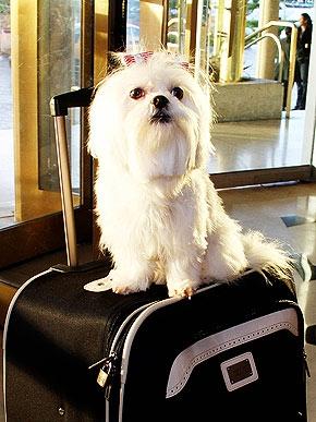 Spotted celebs 39 favorite pet friendly hotels from miami for Miami pet friendly hotels