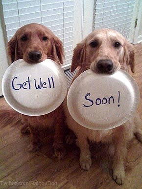 get well soon dog