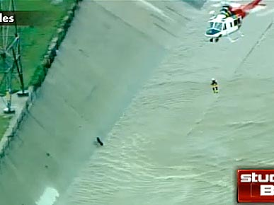 VIDEO: Amazing Rescue! Dog Saved from L.A. River by Firefighter