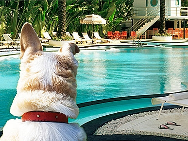 6 pet friendly retreats for valentine 39 s day raleigh for Pet friendly hotels in miami fl