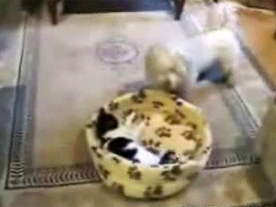 Friday's Funny Video: Doggie Wants His Bed Back – But Kitty Isn't Moving!