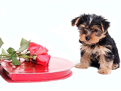 7 Tips for Keeping Your Pet Safe This Valentine's Day