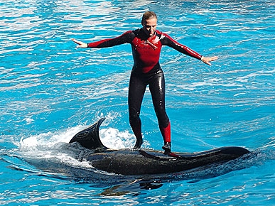 Killer Whale Yanked Trainer into Tank by Her Ponytail